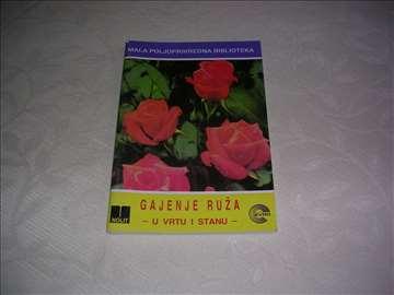 Gajenje ruža u vrtu i stanu