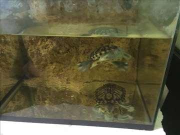Morske Koranjače i Veliki akvarijum
