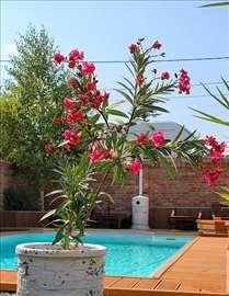 Prodaja Oleandera