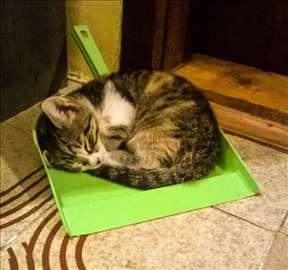 Male mace traže dom!