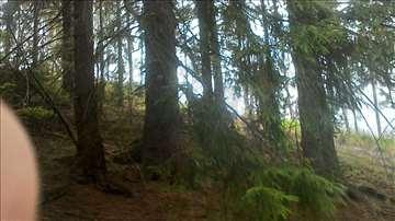 Prodajem šumu sa zemljom u Ivanjici