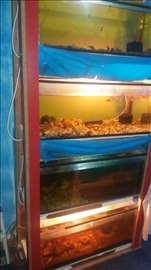 Prodajem akvarijume sa ribicama
