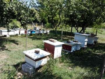 Prodajem 11 društava ( košnice i pčele )