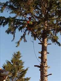 Orezivanje i obaranje rizičnih stabala