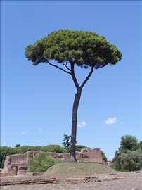 Drvoseča - rad na visini
