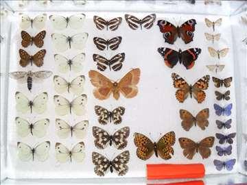 Insektarijum bubarijum insekti bube prodaja