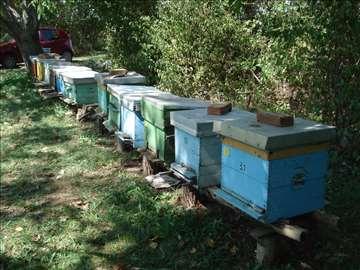 Pčele sa košnicama