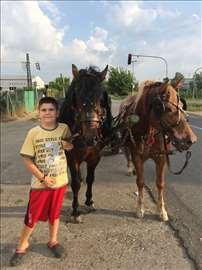 Prodajem konje i Fijaker
