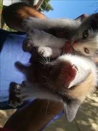 Mačićima potrebni vlasnici