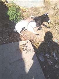 Mini koza