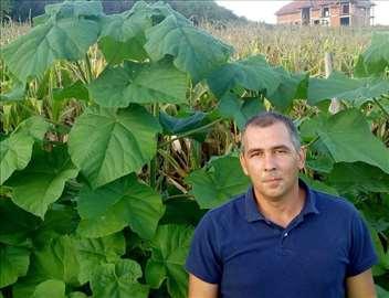 Paulovnija - hit cena za ogrev i biomasu