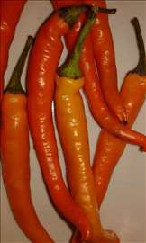 Seme chili papricice