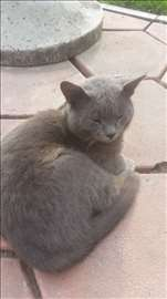 Nestao mačak u Sremskoj Mitrovici