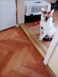 Poklanja se sterilisana,trobojna maca