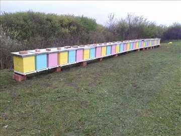 Prodajem 50 pčelinjih društava na 10 LR ramova