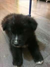 Štene Beri traži dom!!!