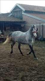 Kobila na prodaju