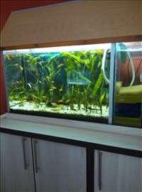 Akvarijum potpuno opremljen