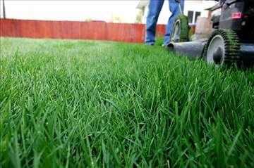 Prodaja semena parkovskih trava