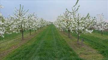Smeša trava za voćnjake i vinograde