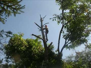 Orezivanje i seča drva - орезивање и сеча дрва