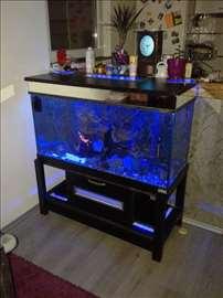 Akvarijum, ribice i prateća oprema
