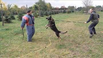 Na prodaju trenirani psi čuvari