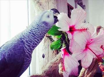 Sve vrste pitomih ptica na jednom mestu