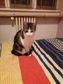 Umiljate mace traže stalni dom
