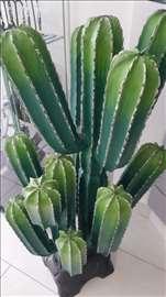 Drveni kaktus, uvoz iz Indonezije
