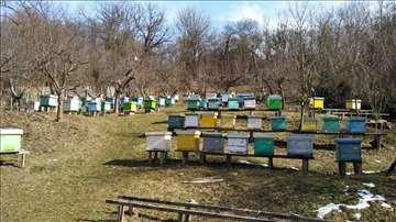 Prodaja db pčelinjih drustava