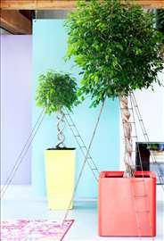 Kancelarijske i sobne biljke