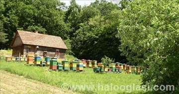 Pčele na ramovima