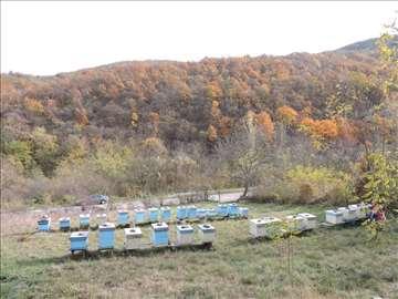 U Bovnu, Aleksinac, pčele