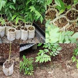 Vrećice za rasad, BioRazgradive,8x10cm,novo,100kom