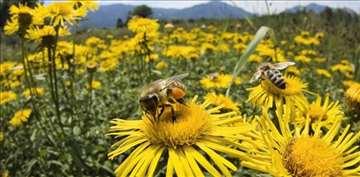 Rojevi i pčelinja društva