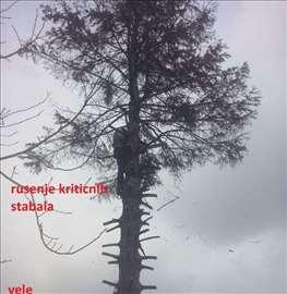 Kritična seča i obaranje stabala!