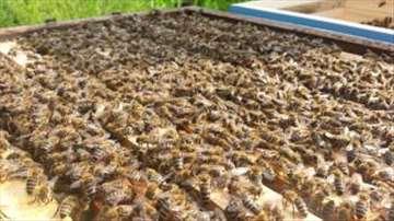 Prodajem pčelinja društva i rojeve