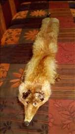 Okovratnik lisica