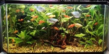 Akvarijumske biljke