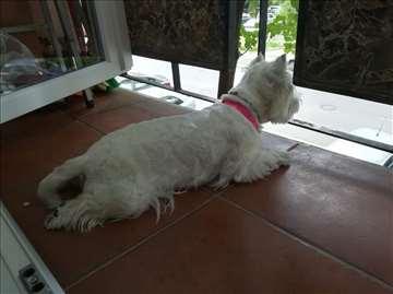 Čuvanje pasa u stanu Zemun