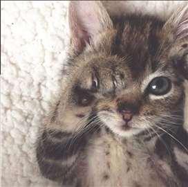 Mačkić Yugo na poklon! BEOGRAD