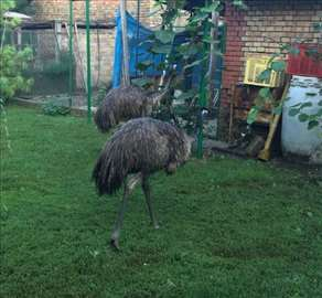 Prodaja Emua