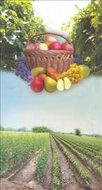Prvoklasne voćne sadnice i lozni kalemi