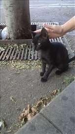 Crni macorcic za srecu