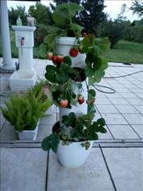 Stubovi za gajenje cveća jagoda, kaktusa.......