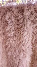 Jambolija vunena