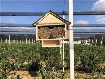 Solitarne pčele. Za sigurniji i veći prinos ploda