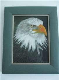 "Slika - ""Pogled beloglavog orla"""