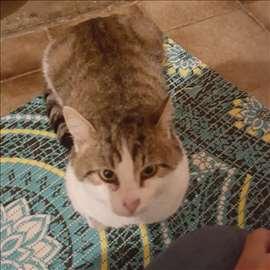 Peca beogradski mačak traži dom